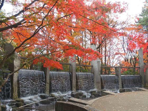 蚕糸の森公園 紅葉