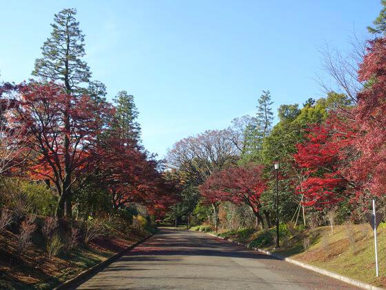 皇居 山下通り 紅葉