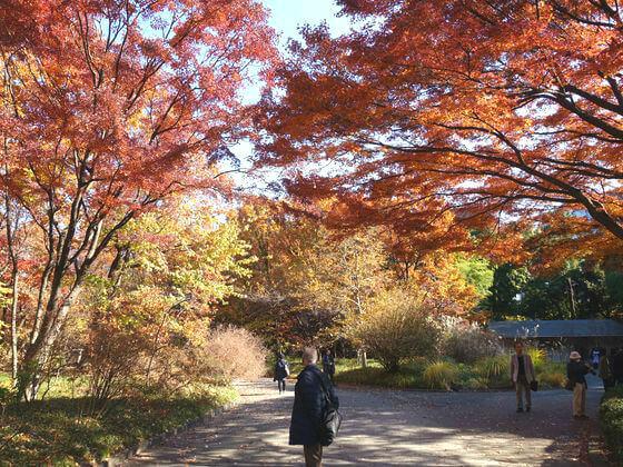 二の丸雑木材 紅葉