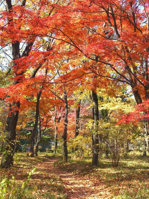 東御苑 二の丸雑木材 紅葉