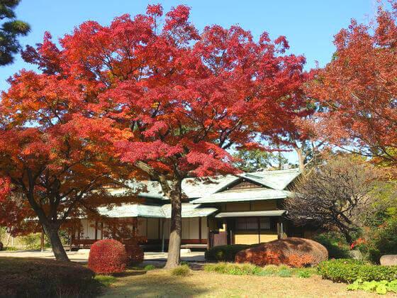 皇居東御苑 諏訪の茶屋 紅葉