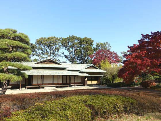 東御苑 諏訪の茶屋 紅葉