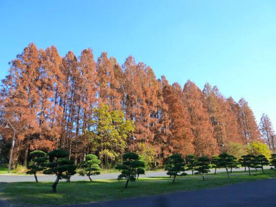 水元公園 紅葉 現在