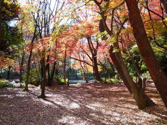 石神井公園 紅葉 見どころ