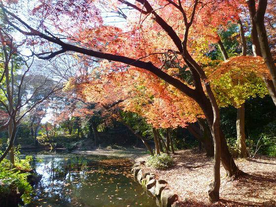 石神井公園 記念庭園 紅葉
