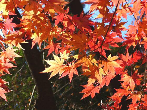 石神井公園 紅葉 見頃