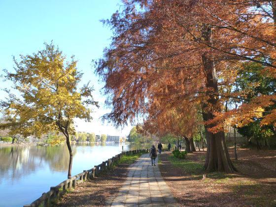石神井池 紅葉