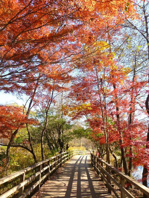 石神井公園 水辺観察園 紅葉