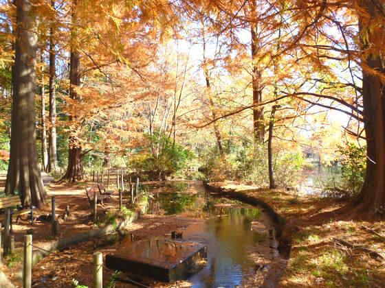 石神井公園 紅葉