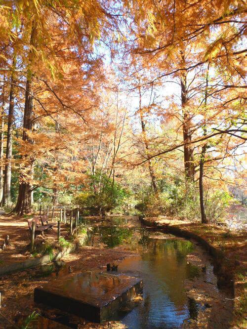 石神井公園 三宝寺池 紅葉