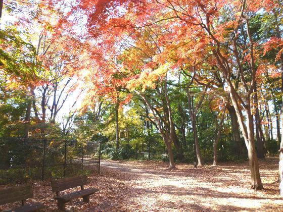 石神井公園 野鳥誘致林 紅葉