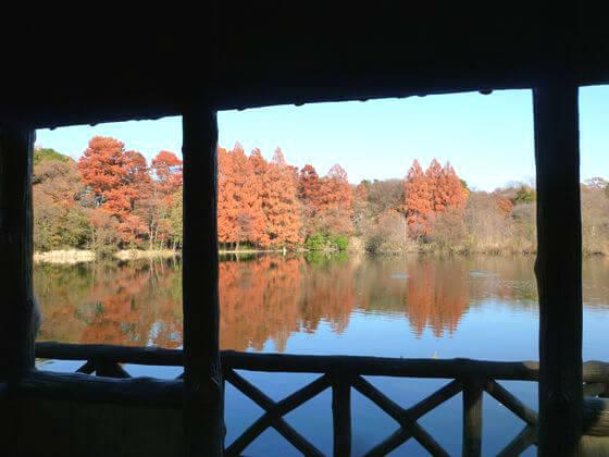 石神井公園 厳島神社 紅葉