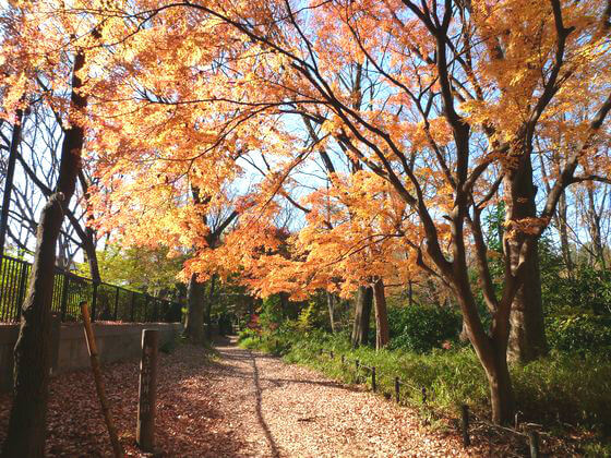 石神井公園 紅葉 状況
