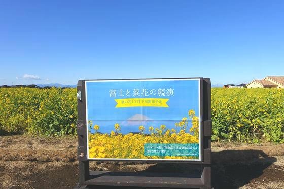 ソレイユの丘 菜の花畑