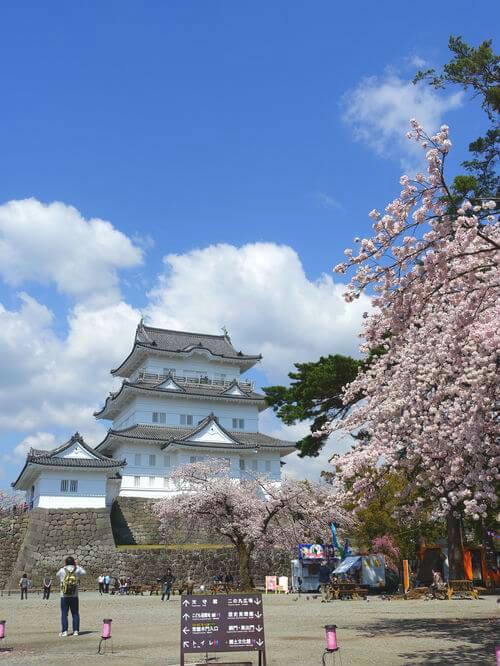 桜 小田原城