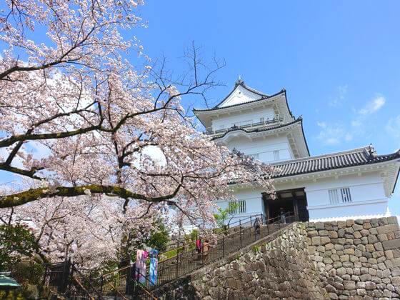 小田原城 お花見