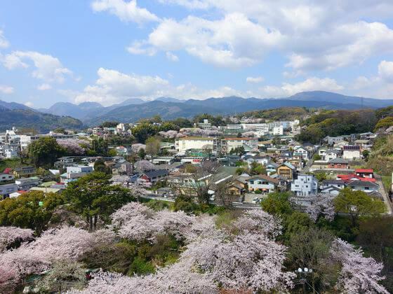 小田原城の天守閣からの桜