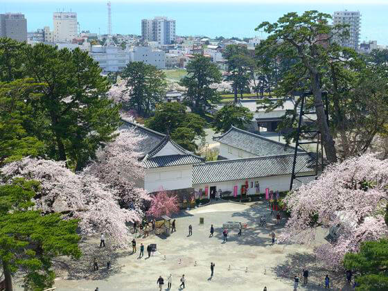 小田原城 天守閣 桜