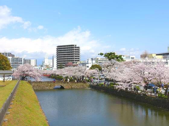 小田原城 桜並木