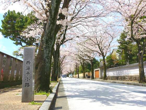 西海子小路 桜