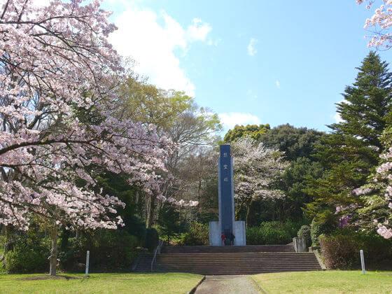 小田原城山公園 桜