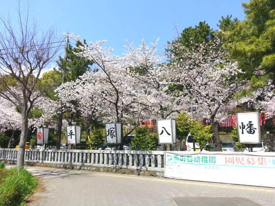 桜 平塚八幡宮