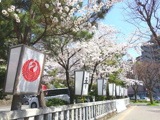 平塚八幡宮 桜