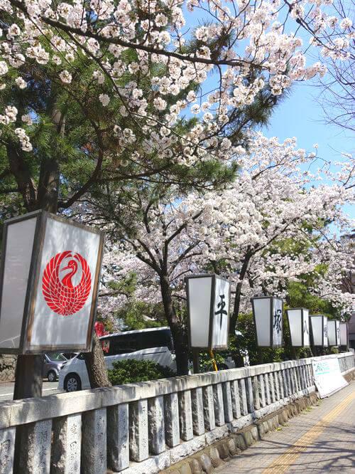 ソメイヨシノ 平塚八幡宮