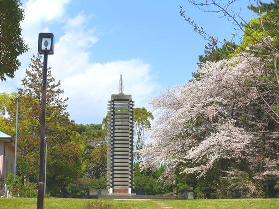 平塚市八幡山公園 桜