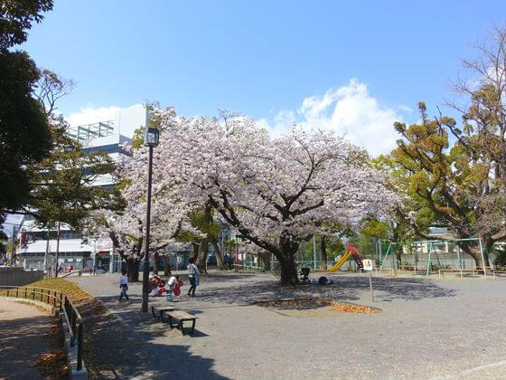 平塚市八幡山公園 花見