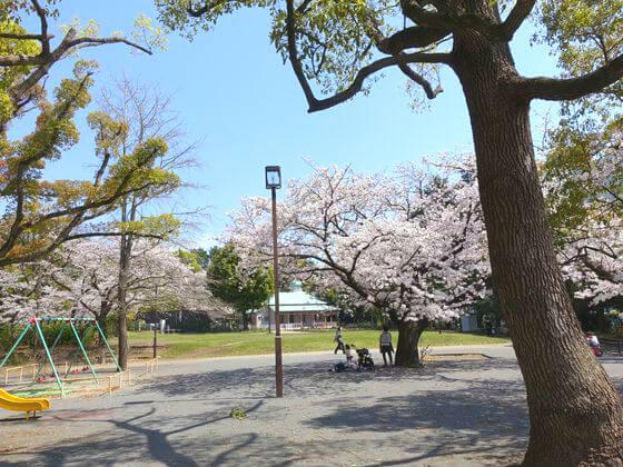 平塚市八幡山公園 お花見