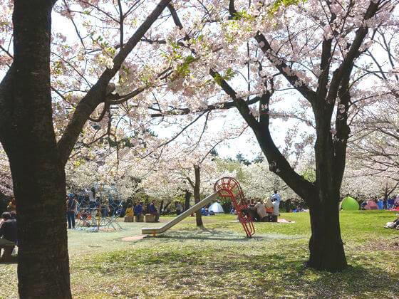 平塚 桜の広場