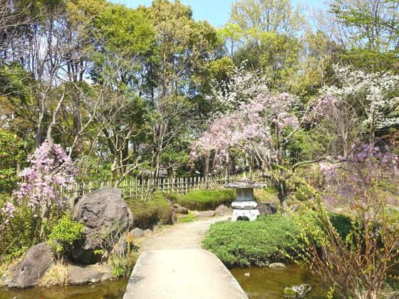 平塚市総合公園 日本庭園 桜