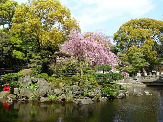 平塚八幡宮 枝垂れ桜