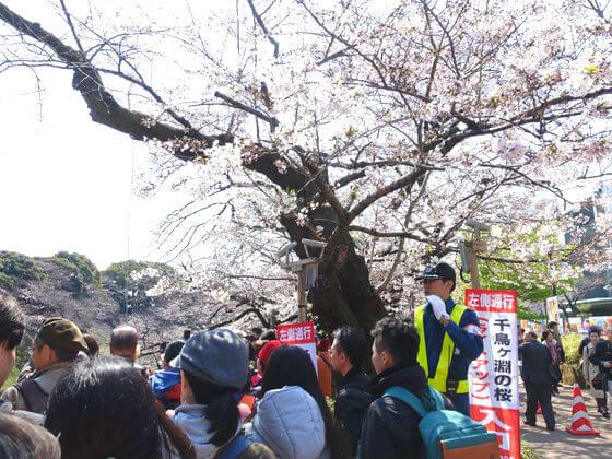 千鳥ヶ淵 桜 混雑