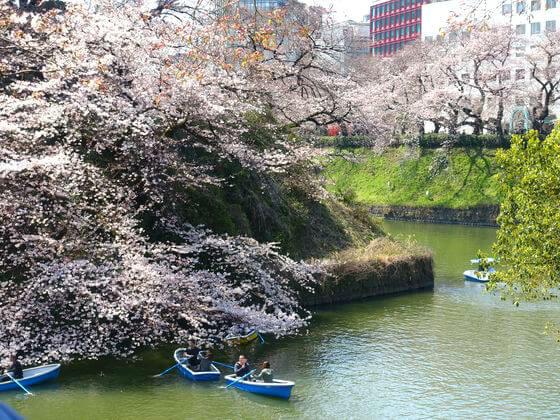 千鳥ヶ淵 桜 ボート 待ち時間