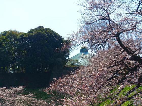 日本武道館 桜