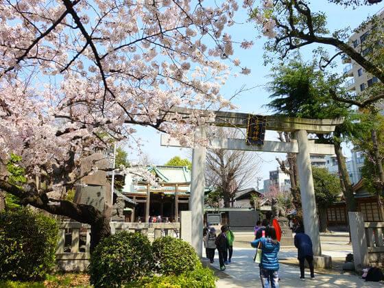 牛嶋神社 桜