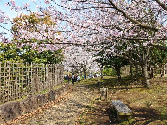 葛西臨海公園 日本庭園 桜