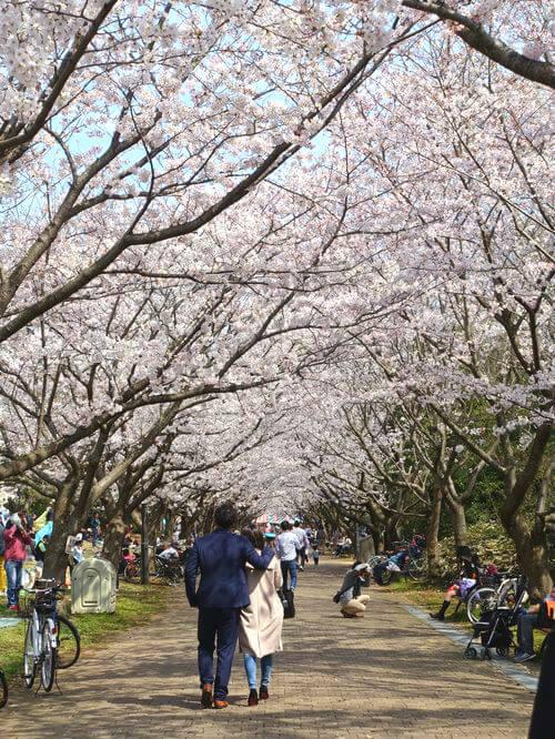 葛西臨海公園 お花見デート