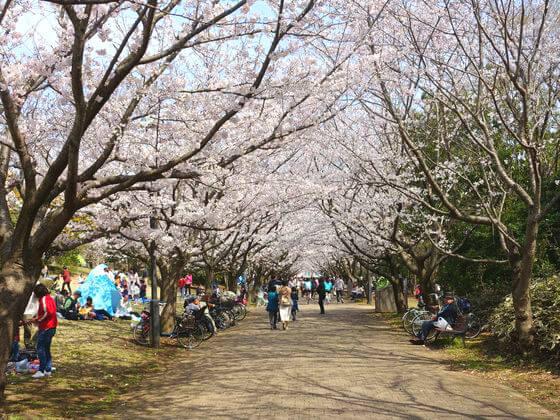 葛西臨海公園 桜 見頃