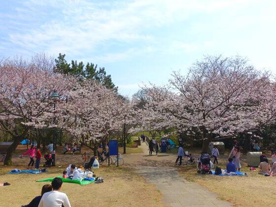 桜並木 葛西臨海公園