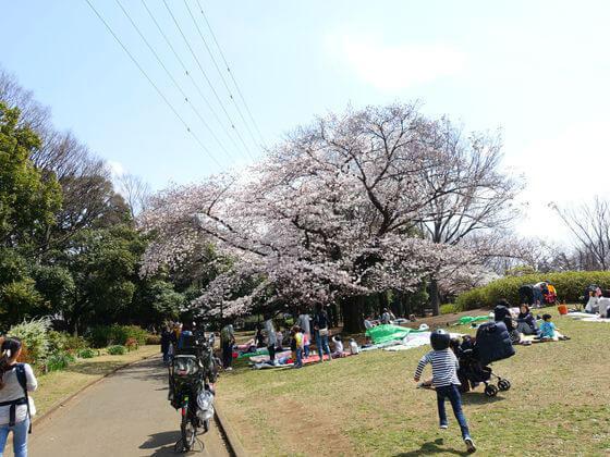 駒沢公園 自由広場 花見