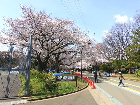 駒沢公園 お花見