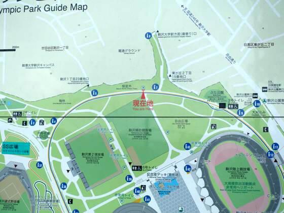 駒沢公園 お花見 場所