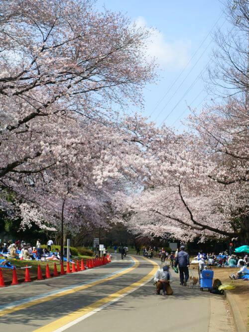 駒沢公園 花見