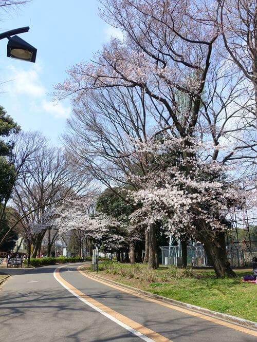 駒沢公園 花見 子供