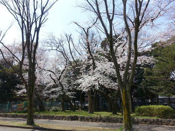 駒沢公園 チリリン広場