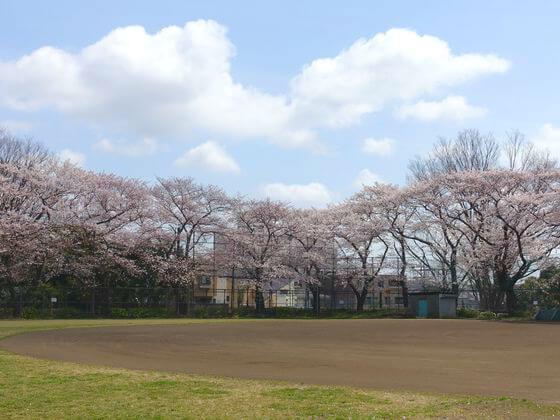 駒沢軟式野球場 桜