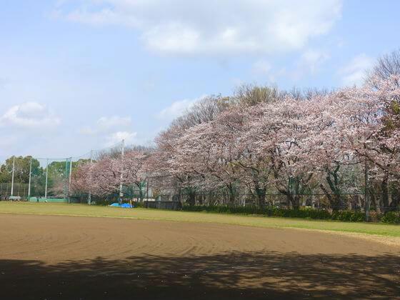 駒沢オリンピック公園 花見